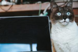パソコン前の猫3