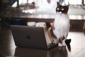ノートパソコンを使ってプレゼンする猫