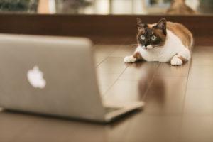 パソコン前の猫4