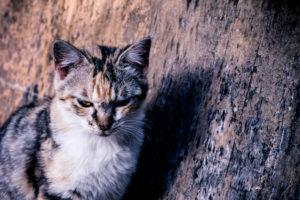 悔しい顔をするネコ