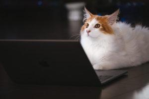 パソコン前の猫1