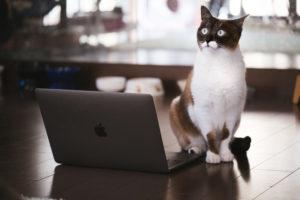 パソコンの前で「気をつけ」するネコ