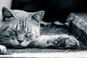 倒れるネコ