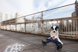 路頭に迷う牛さん